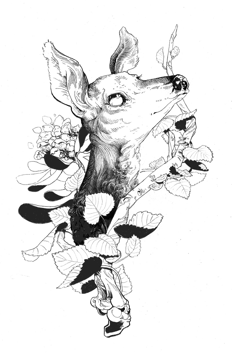 White Tailed Deer, Rhododendron, White Birch